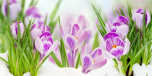 Весенние цветы в ароматах на 8 Марта