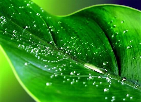 Цвет парфюмерии зеленый